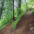 A Hiking Trail Goes Up Saddle Mountain by Robert L. Potts
