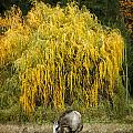 A Horse And A Willow Tree by Belinda Greb