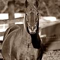 A Horse Is A Horse II by Deena Stoddard