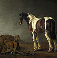 A Horse With A Saddle Beside It by Abraham van Calraet