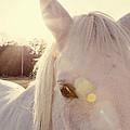 A Horse's Eyes by Erin Johnson