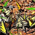 A Kaleidoscope Of Butterflies by Tara Potts