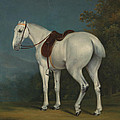 A Ladys Grey Hunter by Jacques-Laurent Agasse