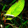 A Leaf... by Tim Fillingim