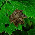 A Leaf Upon A Leaf by Jeff Swan
