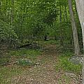 A Leisurely Stroll Through The Putnam County Veteran Memorial Park Woods by James Connor