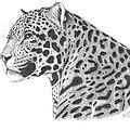 A Leopard's Watchful Eye by Patricia Hiltz