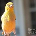 A Little Birdie Told Me by Susan Carella