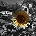 A Lone Sunflower In The Shade by Deborah Fay
