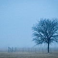 A Lone Tree In The Fog by David Perry Lawrence