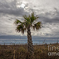 A Lonely Palm Tree by Robert Loe