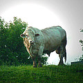 A Lot Of Bull by Nancy Griswold