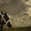 A Lovely Horse by Eduardo Tavares