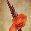 A Loving Gladiolus by AGeekonaBike Fine