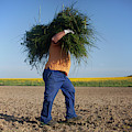 A Man Harvests Sedge To Be Used by Chico Sanchez