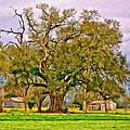 A Mighty Oak - Paint by Steve Harrington