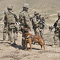 A Military Working Dog Accompanies U.s by Stocktrek Images