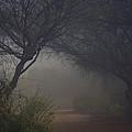 A Misty Morning  by Saija  Lehtonen