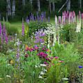 A Mixture Of Flowers Bloom In Hillside by Robert L. Potts