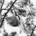A Model Wearing A Dress In A Tree by Gene Moore