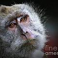 A Monkey's Look by Ben Yassa