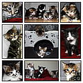 A Montage Of Kittens by Terri Waters