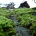 A Mossy Perspective by Andrew Fleming