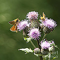 A Moth's Feast by Arizona  Lowe