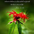 A Mountain Flower  John 3 16 by Randall Branham