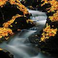 A Mountain Stream Carves A Path by Keith Ladzinski