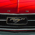 A Mustang  by Steve Taylor