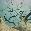 A Naked Tree by Jeffery L Bowers
