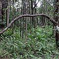 A Natural Arch by Pamela Walton