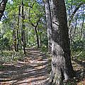 A Nature Walk by Deborah Good