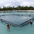 A Net For Turtle Research by Science Photo Library