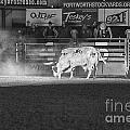 A Night At The Rodeo V2 by Douglas Barnard