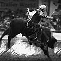 A Night At The Rodeo V4 by Douglas Barnard