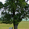 A One Horse Tree And Its Horse by Jacqueline  DiAnne Wasson