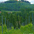 A Painting A Tuscan Vineyard And Villa by Mike Nellums