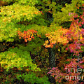 A Painting Adirondack Autumn by Mike Nellums