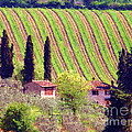 A Painting Tuscan Vineyard by Mike Nellums