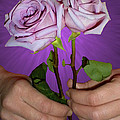 A Pair Of Purple Roses by Thomas Woolworth