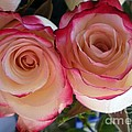 A Pair Of Roses  by Graciela Castro