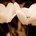 A Pair Of Tulips by Kathy Sampson