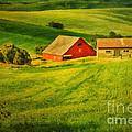 A Palouse Farm by Priscilla Burgers