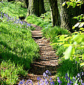 A Path Through An English Bluebell Wood In Early Spring by John Keates