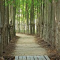 A Path To... by Lucy Raos