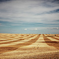 A Pattern Of Stripes Across A Farmers by Todd Korol