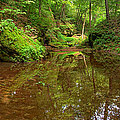 A Peaceful Glen by Leda Robertson