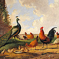 A Peacock And Chickens In A Landscape  by Albertus Verhoesen